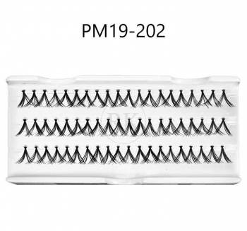 PM19-202